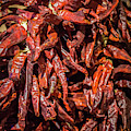 Hot Spicy Peppers by Max Huber