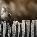 House Wren by Randy J Heath
