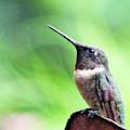 Hummingbird 90 by Lizi Beard-Ward