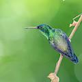 Hummingbird Abyss by Christian Irian