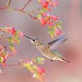 Hummingbird Parfait 2 by Lynn Bauer