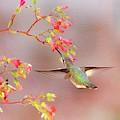 Hummingbird Parfait by Lynn Bauer