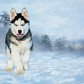 Husky Pup In The Snow - Painting by Ericamaxine Price