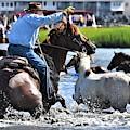 Hustling A Stray Wild Horse - Chincoteague Pony Run by Kim Bemis
