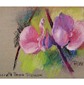 Hyacinth Bean Blossom by Betsy Derrick