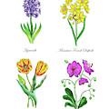 Hyacinth Daffodil Tulip Orchid Botanical Watercolor  by Irina Sztukowski