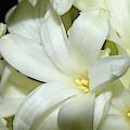 Hyacinth by Larah McElroy