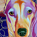 I Should Have Been Jackson Pollock's Dog by Jody Wright
