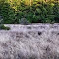 I Spy 4 Deer by Julia Telligman