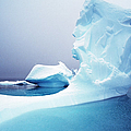 Icebergs Floating On Antarctic Peninsula by Alexander Nicholson