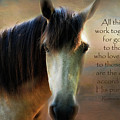 If Horses Could Talk - Verse by Anita Faye