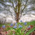 In The Shade Of The Oak Tree by Kristen Wilkinson
