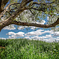 In The Shade Of The Old Oak Tree by Endre Balogh