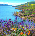 Incredible Beauty At Diamond Valley Lake - Superbloom 2019 by Lynn Bauer