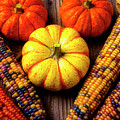 Indian Corn And Mini Pumpkins by Garry Gay