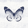 Indigo And White Butterfly 1- Art By Linda Woods by Linda Woods