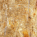 Maze Carved By Wood Bore Beetles by Sue Smith