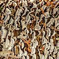 Turkey Tailed Bracket Fungi by Sue Smith