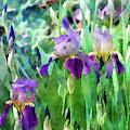 Iris Garden 6817 Idp_2 by Steven Ward