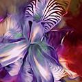 Iris Splendor 12 by Lynda Lehmann