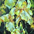 Iris by Tetiana Korol