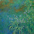 Irises, 1914-1926 by Claude Monet