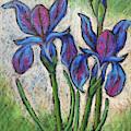 Irises In Bloom by Karla Beatty