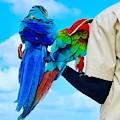 Island Birds  by Cindy Greenstein