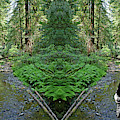 Jam In Muir Woods #1 by Ben Upham
