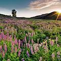 Jarbidge Mountain Wildflowers by Leland D Howard