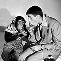Jerry Lewis & Chimpanzee by Peter Stackpole