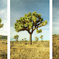 Joshua Tree Collage by Alexander Kunz