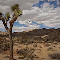 Joshua Tree National Park by Angel La Canfora