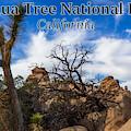 Joshua Tree National Park, California Box Canyon 02 by G Matthew Laughton