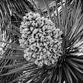 Joshua Tree Super Bloom by Sandra Selle Rodriguez