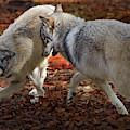 Joyful Wolves by Jeannee Gannuch