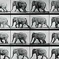 Jumbo Jogger by Eadweard Muybridge