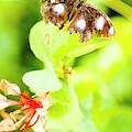 Jungle Bug by Jorgo Photography - Wall Art Gallery