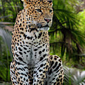 Jungle Leopard by Arterra Picture Library