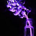 Just Purple by JC Findley