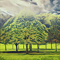 Just Trees by Leigh Kemp