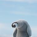Juvenile Emperor Penguin Aptenodytes by Per-gunnar Ostby
