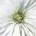 Kaboom Bloom by Cindy Greenstein