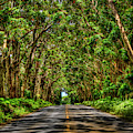 Kauai South Shore Tree Tunnel Eucalyptus Tree Landscape Art  by Reid Callaway