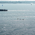 Kayaking On The Hudson by Sharon Popek