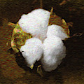 King Cotton by Barry Jones