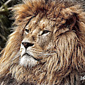 King Of The Jungle - Dwp3583963 by Dean Wittle