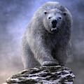 King Polar Bear by Daniel Eskridge