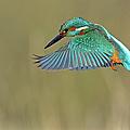 Kingfisher by Mark Hughes