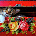 Kitten In Red Wooden Box by Garry Gay